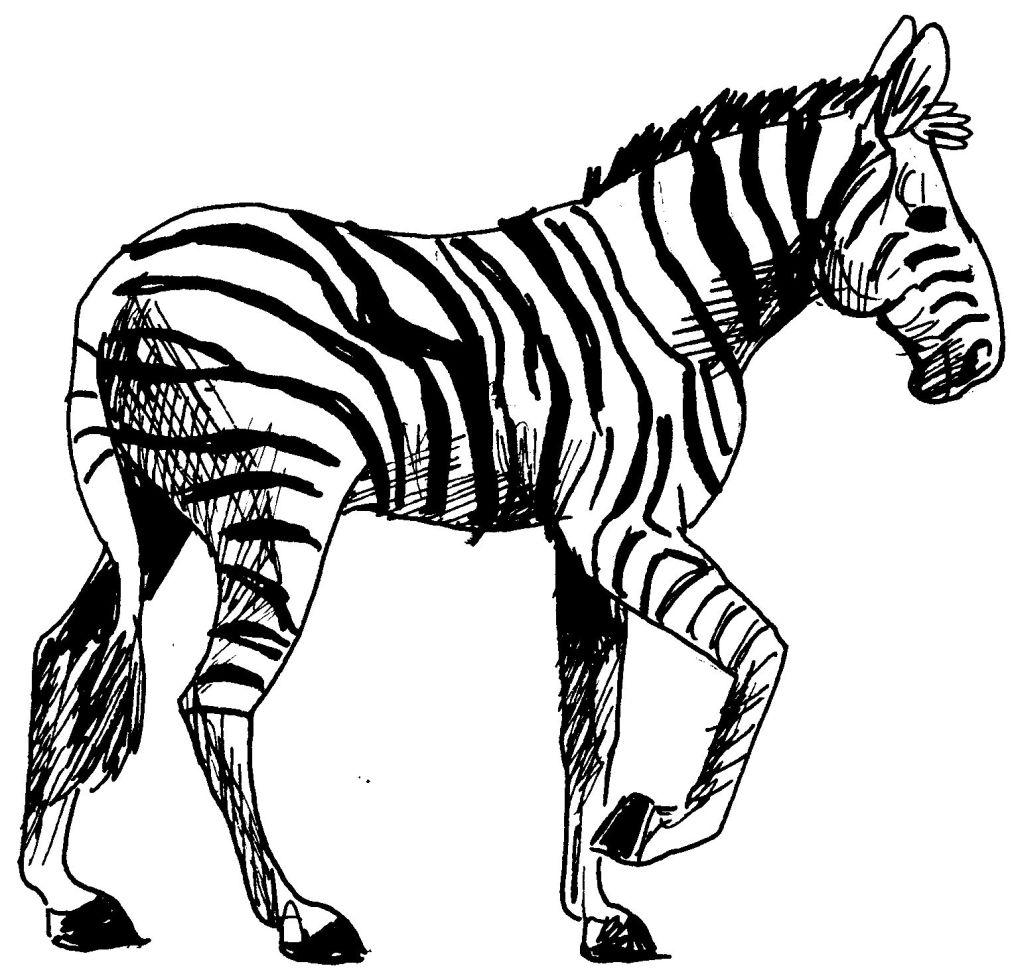 Coloriage z bre d 39 afrique gratuit imprimer afrocaneo - Coloriage zebre a imprimer ...