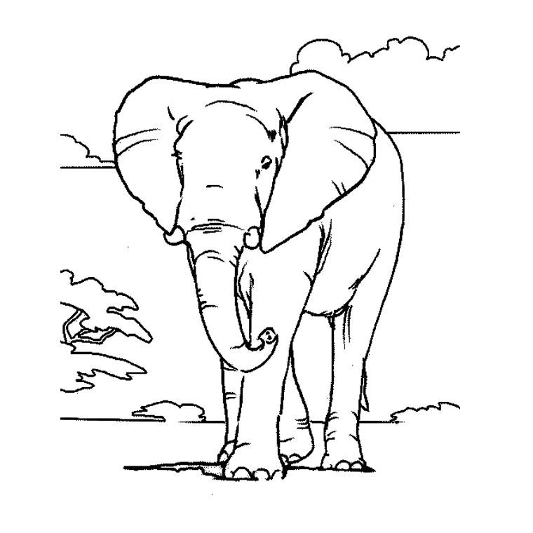coloriage-elephant-afrique