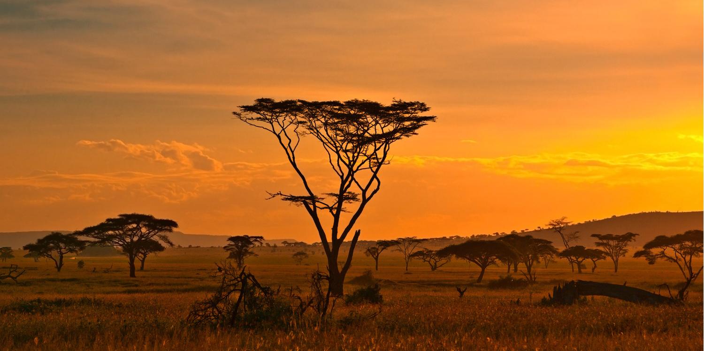 faune de l'afrique