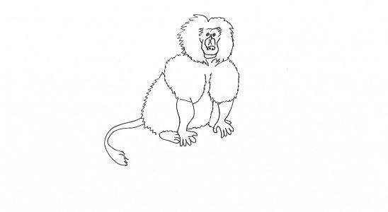 babouin d'Afrique