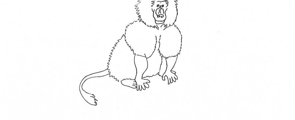 Coloriage babouin d 39 afrique imprimer afrocaneo - Dessin de babouin ...