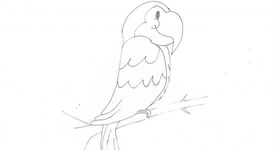 perroquet afrique